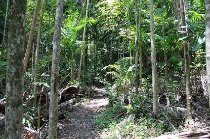 cape_hillsborough_jungle