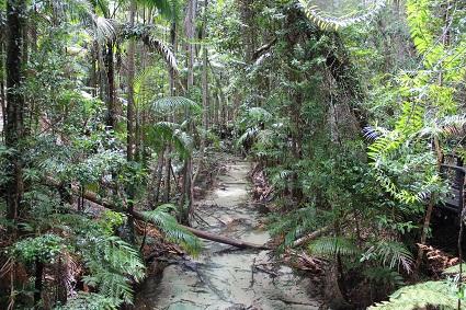 fraser_island_jungle